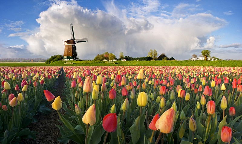 photo1-netherlands-one-group